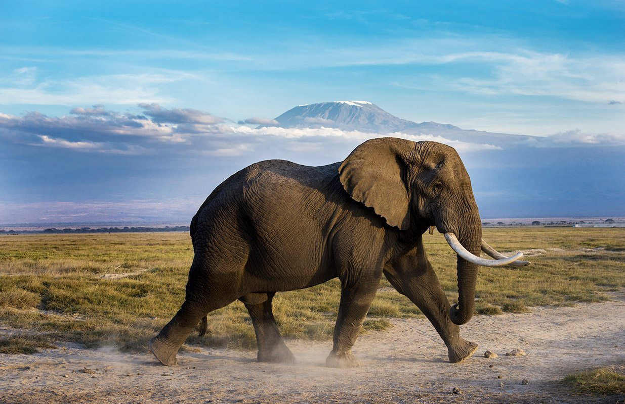 Kenya_Amboseli_WildlifeElephant2